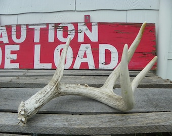 Primitive Rustic • No. 005 Real Whitetail Buck Deer Antler | Farmhouse Chic Shabby Cabin Farm Ranch Style Distressed Weathered Nature | USA