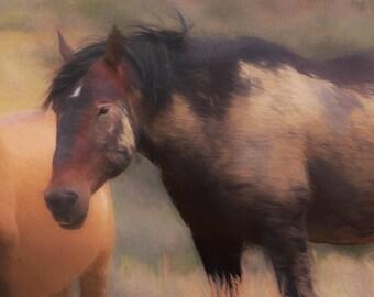 Brave - Fine Art Wild Horse Painting - Wild Mustang of Sand Wash Basin, Wild Horse Painting, sand wash basin wild horses, Colorado stallion