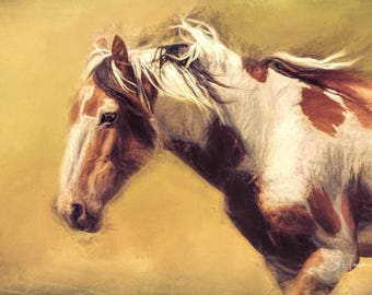 Picasso - Painting - Wild Mustang of Sand Wash Basin, Wild Horse Painting, sand wash basin wild horses, Colorado stallion