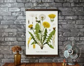 Dandelion Botanical Chart / Vintage Pull Down School Chart Reproduction / Canvas Fabric Print / Oak Wood Hangers with Brass  /Wall Hanging