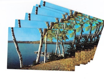 Maine Lake with Birches Postcard - Save the Date