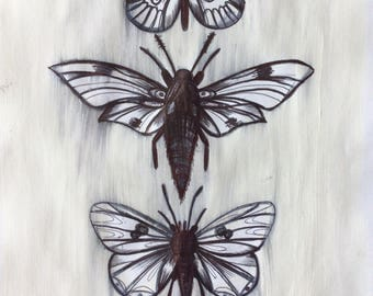 Buterflies and Moths, Original Artwork Ink Drawing on Paint and Papper