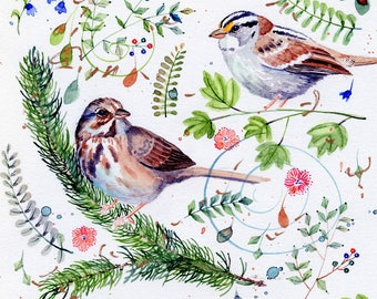song and white crowned sparrows original watercolor painting part of sparrow collection