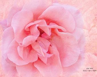 flower print, pink rose print, floral art print, nature photography, flower photography, floral print, rose décor, wall art prints