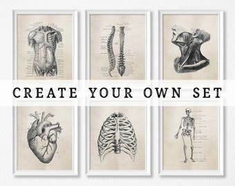 Human Anatomy Art Prints - Science - Biology - Medical Student - Doctor's Office - Graduation Gift - Brown or Grey - Vintage Anatomy
