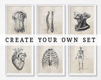 Human Anatomy Art Prints - Science - Biology - Medical Student - Doctor's Office - Graduation Gift - Brown or Grey - Vintage Anatomy