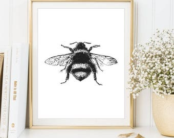 BumbleBee Print Black And White Art Vintage Sign Insect Poster Bee Illustration
