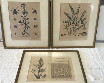 Set of 3 engraved lithograph framed prints( Polianthes, Catesbaea and Antirrhinum)