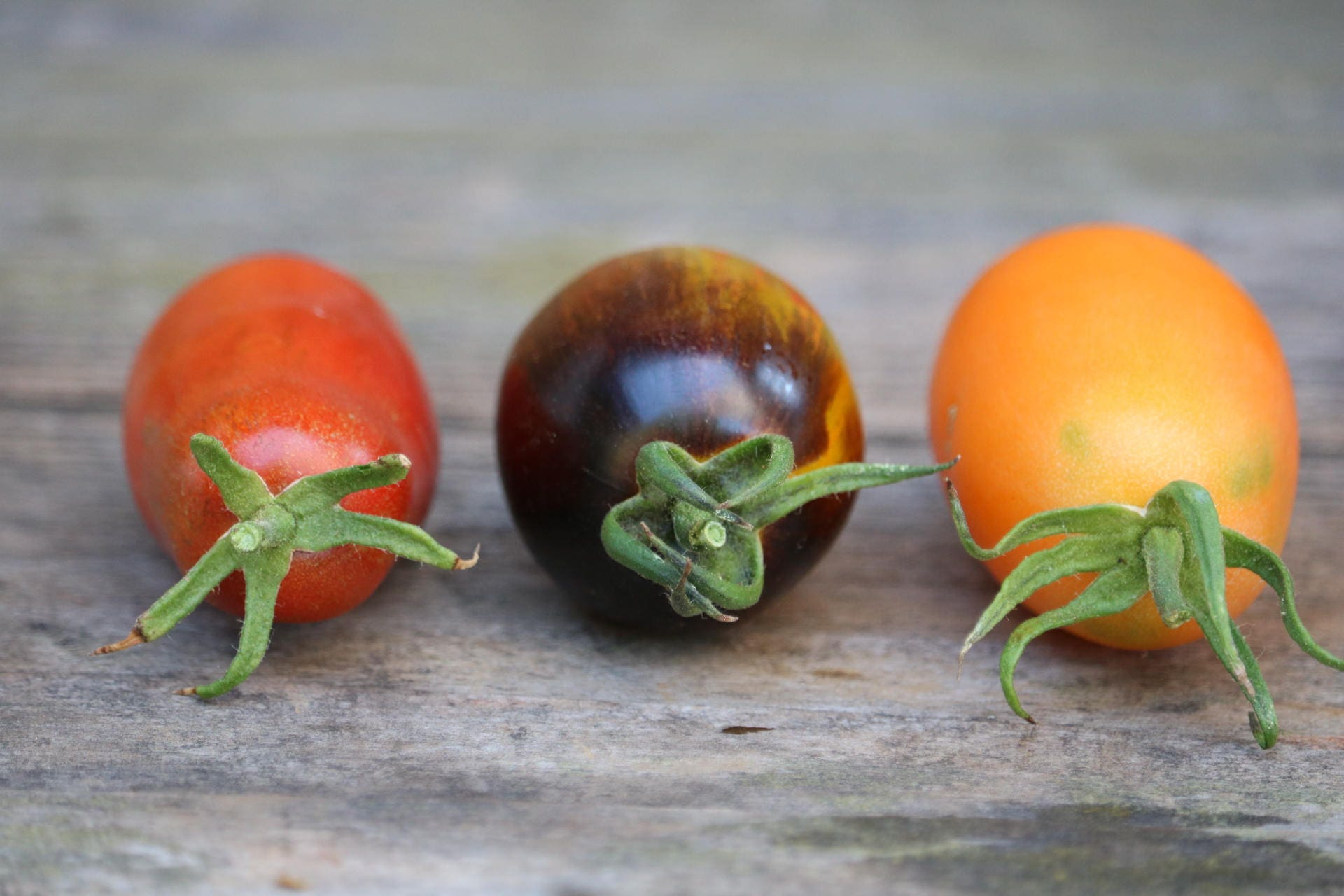 how to get seeds from heirloom tomatoes