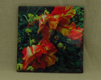 """4""""x4"""" Ceramic Coaster Yellow and Red Parrot Tulips"""