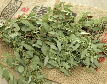 Seeded Eucalyptus 5-7 stem bunches