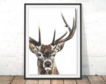 Stag Art Print, Deer Poster, Stag Print, Watercolour Stag Wall Art, Deer Art Print, Stag Painting, British Wildlife Artwork