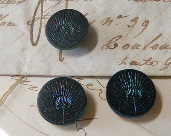 Antique Iridescent Peacock Feather Black Glass Button