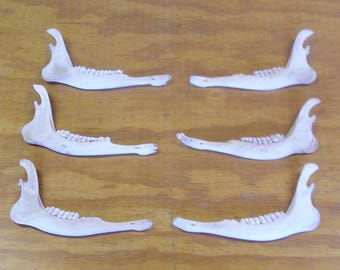6 Deer Jaw Bones