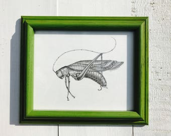 Grasshopper an Original Pencil Drawing with Frame