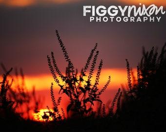 Sunset Landscape, Nature Photography, Texas Fields, 8x10 Photography Print