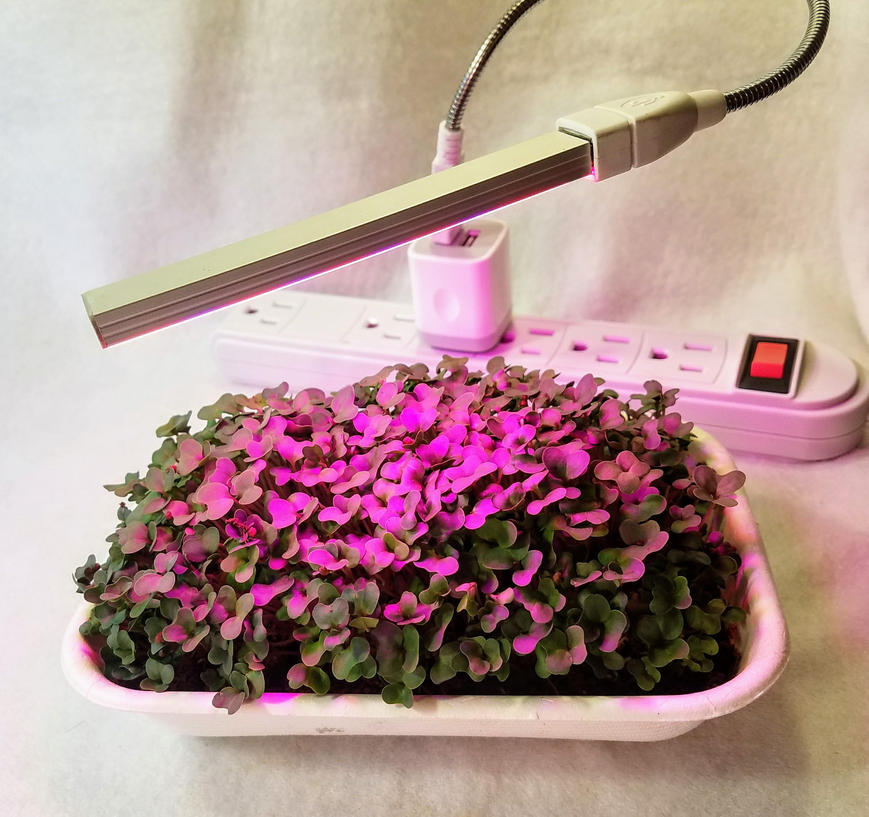 LED Supplemental Grow to Eat Grow Light Low Energy Grow Light Add to our Grow to Eat Kits for Complete Indoor Microgreen Solution & LED Supplemental Grow to Eat Grow Light Low Energy Grow Light ... azcodes.com