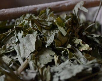 ORGANIC LOVAGE herb • Levisticum officinale • Dried • Aerial Parts • Apiaceae • Non-irradiated • Non-gmo • Whole Herb • USA Grown • 1/4oz