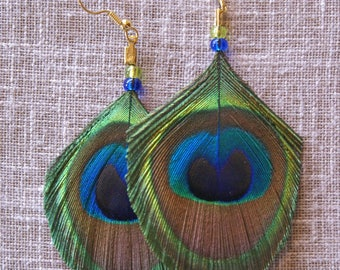 Earrings with feathers of Peacock (for pierced ears)