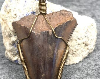 Fossil mako shark tooth pendant, wire wrapped