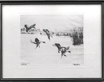 "Vintage 1934 Signed Original Drypoint Etching ""Rice Field Pintails"" By Richard Bishop"