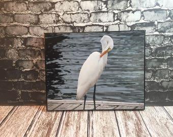 White heron on a dock - Beaufort NC - photo canvas - bird art - beach house decor - Heron art - bird lover gift - coastal photography