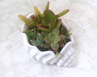 Sea Shell Shaped Succulent Planter - Live Succulents Included - Unique Succulent Planter
