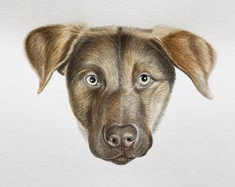 DOG PORTRAIT CUSTOM , face portrait