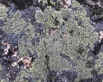 Stone Background Green Lichen
