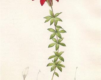 Flower Print Red Day Lillies - art print - gift for artists - art lovers -- Spring Bouquet - flower print decor oranges