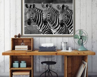 Black and White Zebras Canvas Art Print