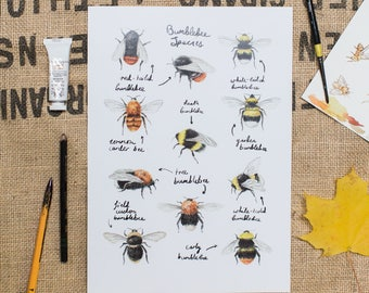 Bumblebee Species Art Print