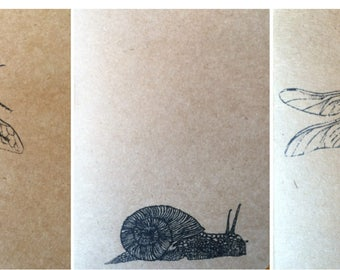3 Insect notbooks
