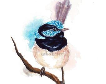 Blue Wren II - Blue Wren Print - Art Print - Bird Print