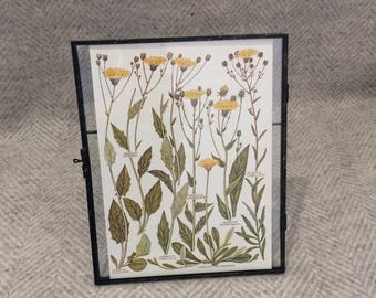 Vintage framed botanical drawing, flower illustrations, botanical print, floral, in glass frame, Green leaves Yellow Dandelions