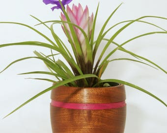 "Small Wooden Planter - 2"" inch Sapele Wood"