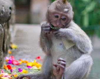 Young Macaque with Hindu Offering
