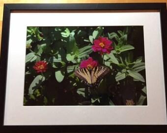 Butterfly on Flower -2007