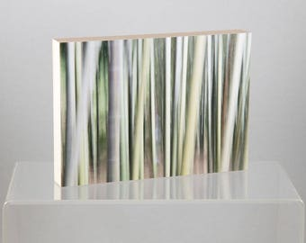 Bamboo , China, mounted on Wood Panel