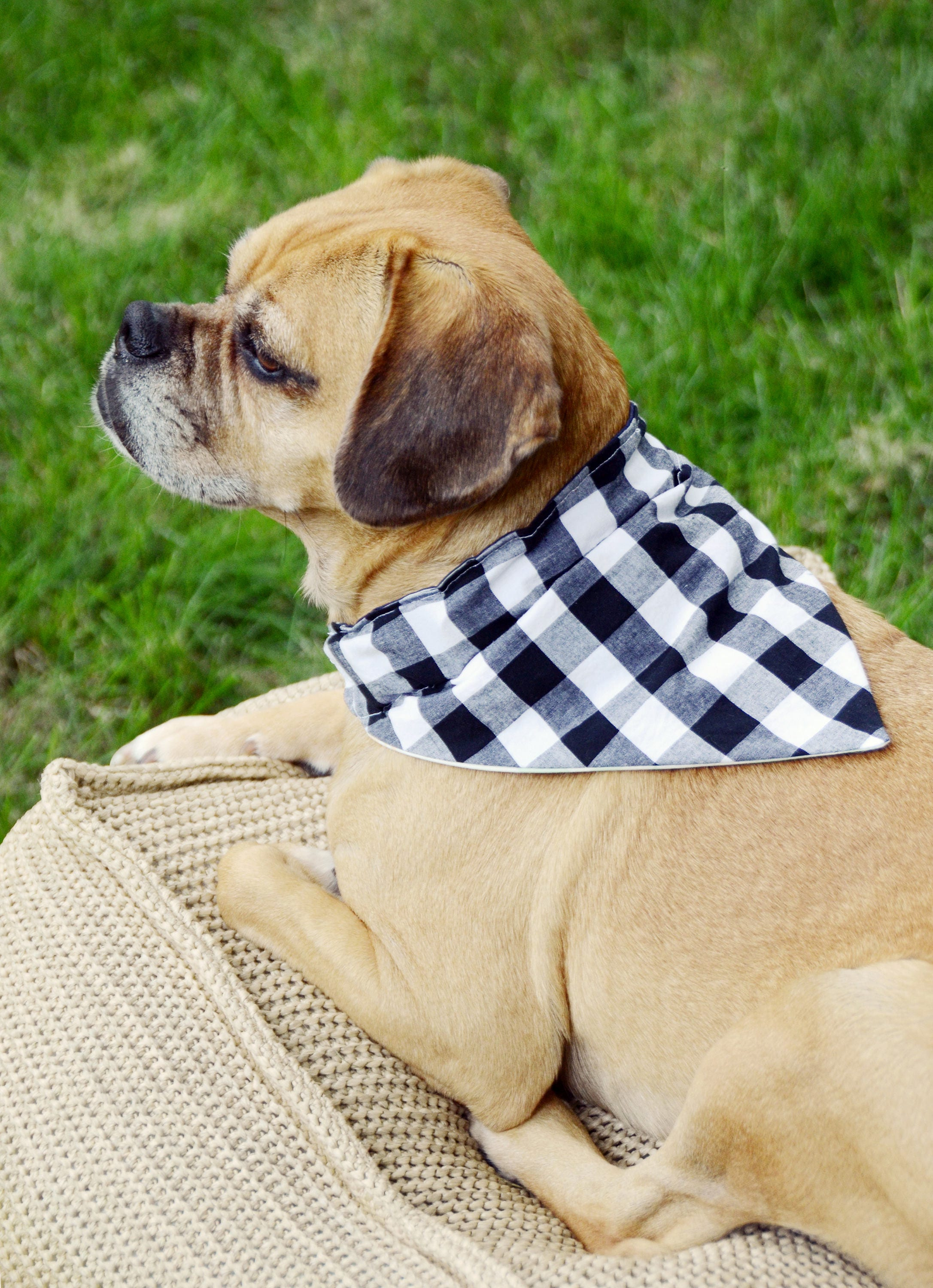 Easy Dog Bandana Sewing Tutorial Instant Download Printable