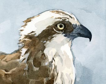 Osprey Watercolor Painting - 5x5 Bird Art Print, nature wildlife art