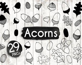 Acorns Clipart - 17 Hand Drawn Acorn Clipart - Leaf Logo Art - Oak leaf Logo Elements - botanical Illustration - 74