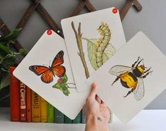Trio of Over-Sized Vintage Flash Cards - Insects - Caterpillar / Butterfly / Bee