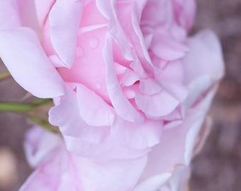 Briar Rose - Art Print
