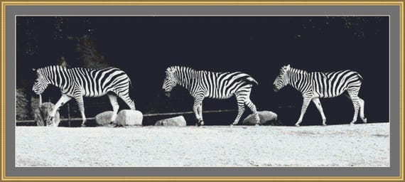 Three Zebras In A Row Cross Stitch Pattern /Digital PDF Files /Instant downloadable