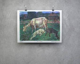 Soviet Poster/Vintage Animal Goat Print/Original Soviet Poster/School Poster/Large Size Goat Collectible Print/USSR Illustration/Educational