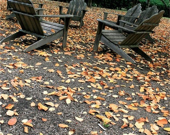 Welcoming Chairs Beneath Autumn Trees Photo - Fallen Orange Leaves - Adirondack Chairs Beneath Fall Trees Photograph - Circle of Friends