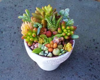 Live Succulent Plant Arrangement Centerpiece Fairy Garden Terrarium Rare Colorful Succulents Clay Pot