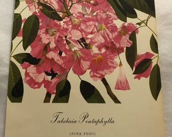 Tabebuia Pentaphylla (Pink Poui) Bernard & Harriet Pertchik 1951 Print from Flowering Trees of the Caribbean Alcoa Steamship