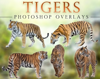 Tigers Overlay Photoshop Overlays for Photographers, Invitations, Scrapbooking, and More. High Quality Instant Download PNG Clipart